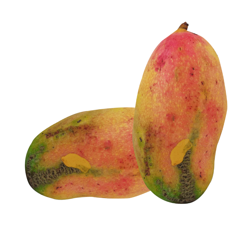 mangue valencia